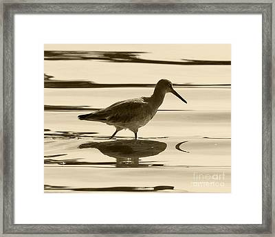 Early Morning In The Moss Landing Harbor Picture Of A Willet Framed Print