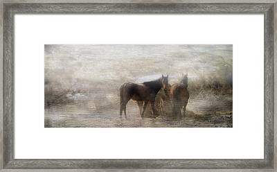Early Morning Meal Framed Print by Kathy Jennings