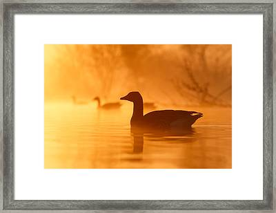 Early Morning Mood Framed Print by Roeselien Raimond