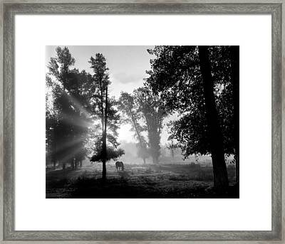 Early Morning Myst And A Horse Framed Print by Wernher Krutein
