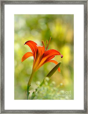 Early Morning Portrait Framed Print by Amy Porter