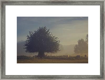 Early Morning Sheep Meet Framed Print by Chris Fletcher