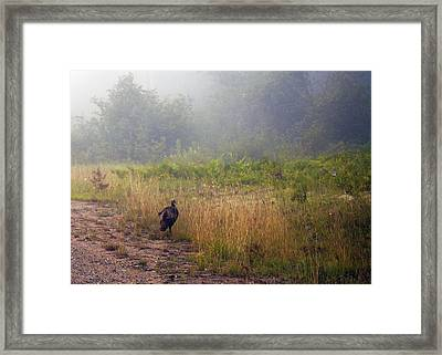 Early Morning Strole Framed Print