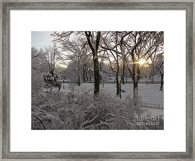 Early Morning Sun In Central Park.  Framed Print