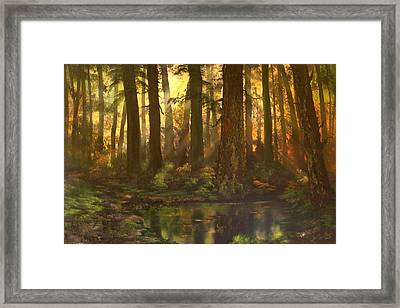 Early Morning Sun On Cannock Chase Framed Print by Jean Walker