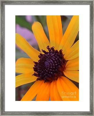 Early Morning Susan Framed Print