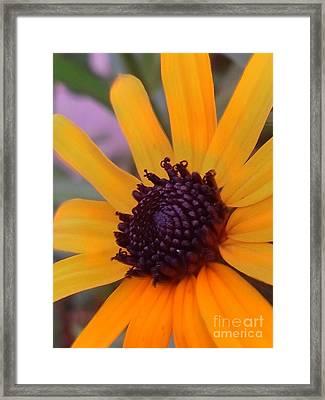 Early Morning Susan Framed Print