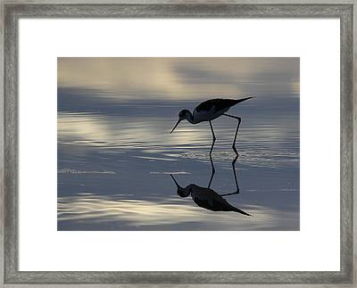 Early Morning Walk Framed Print