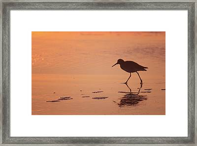 Framed Print featuring the photograph Early Morning Walk by Sharon Jones