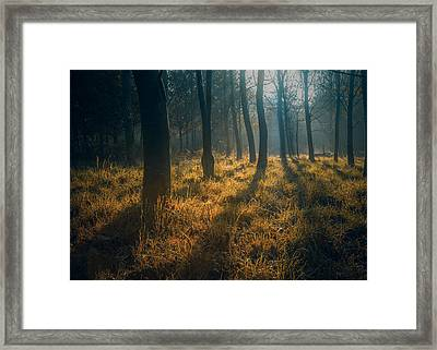 Early Morning Woodland Walk Framed Print by Chris Fletcher