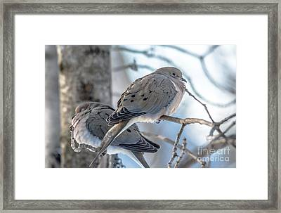 Early Mourning Framed Print by Cheryl Baxter