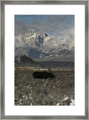 Framed Print featuring the photograph Early Riser by Gary Hall