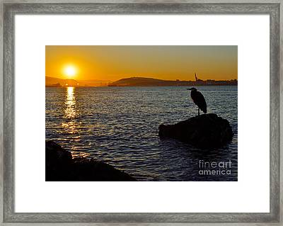 Early Riser Framed Print by Terry Elniski