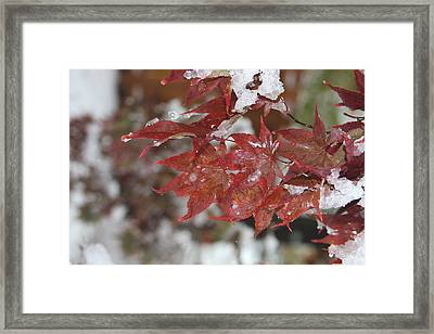Early Snow Framed Print by Vadim Levin