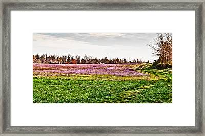 Framed Print featuring the photograph Early Spring Field by Greg Jackson