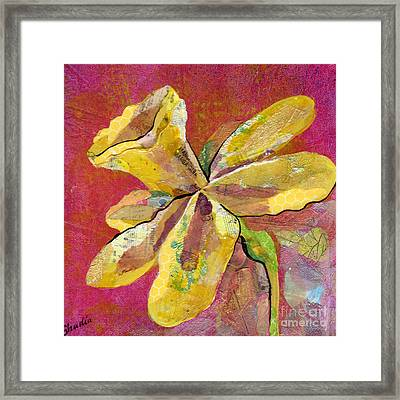 Early Spring II Daffodil Series Framed Print by Shadia Derbyshire