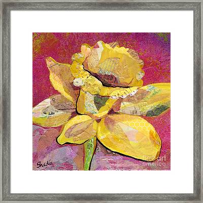 Early Spring IIi  Daffodil Series Framed Print by Shadia Derbyshire
