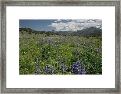 Early Spring In Yellowstone Framed Print by Larry Moloney