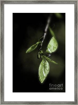 Early Spring Leaves Framed Print by Jill Smith