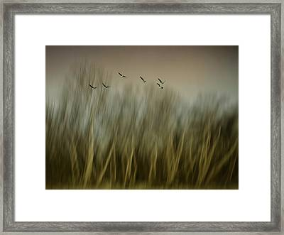 Early Spring Vision... Framed Print