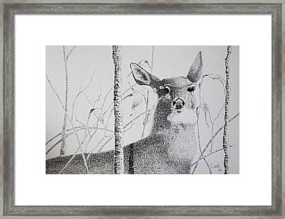 Early Winters Whitetail Framed Print