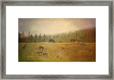 Early Morning  Framed Print