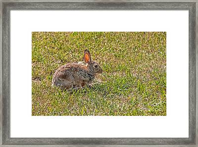 Ears On Fire Framed Print