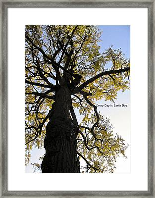 Earth Day Special - Ancient Tree Framed Print by Ivy Ho