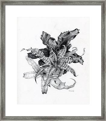 Earth Stars Framed Print by Penrith Goff