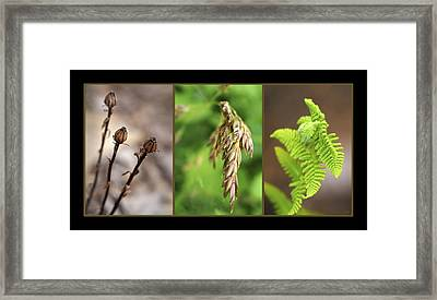 Earth Triptych Framed Print by Christina Rollo