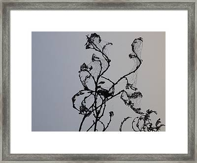 Earth's Sweat On Spiderweb Framed Print