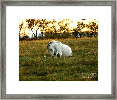 Framed Print featuring the photograph Easier Lying Down by Carol Lynn Coronios