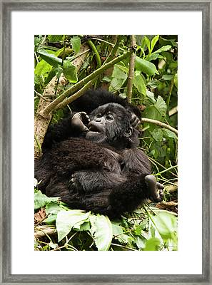 East Africa, Rwanda, Volcanoes National Framed Print