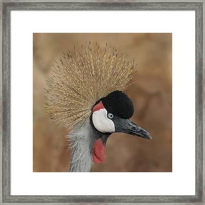 East African Crowned Crane Framed Print