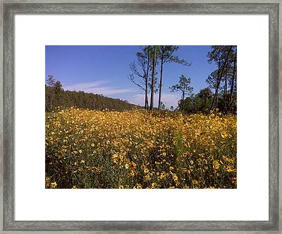 East Coast Dune Sunflowers Framed Print
