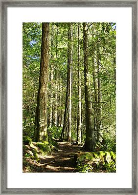 East Sooke Park Trail Framed Print