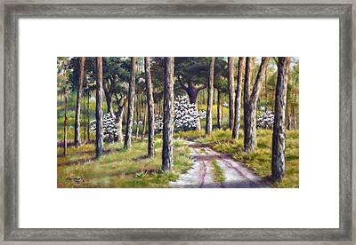 East Texas Dogwood Framed Print by Bob Hallmark