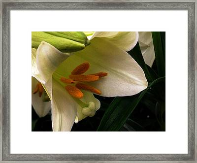 Easter 2014-4 Framed Print
