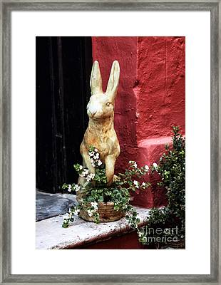 Easter Bunny Framed Print by John Rizzuto