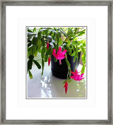 Easter Cactus In The Sun 2 Framed Print by Barbara Griffin