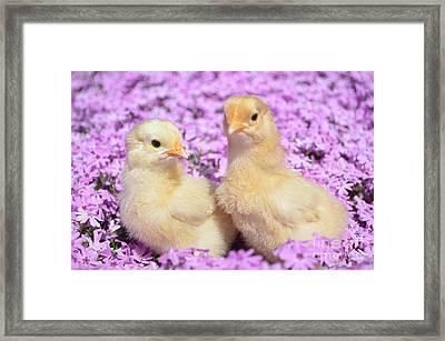 Easter Chicks Framed Print by Kassia Ott
