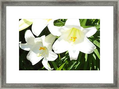 Easter Lilies At Longue Vue Framed Print by Katie Spicuzza