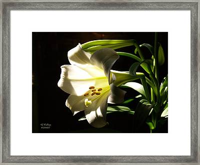 Easter Lilly Framed Print