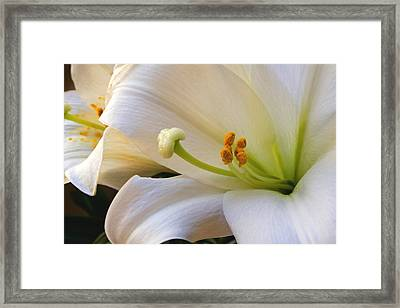 Framed Print featuring the photograph Easter Lily by Bonnie Willis