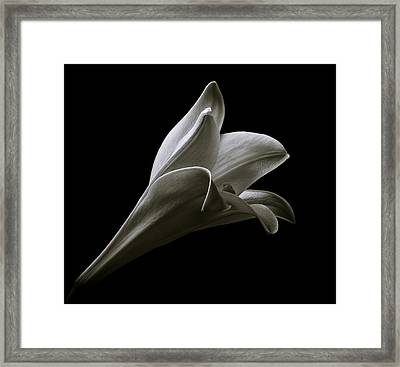 Easter Lily II Framed Print by Jeff Burton