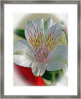 Easter Lily Framed Print by Karen Adams