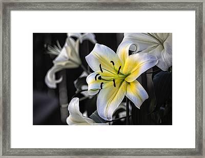 Easter Lily On Black Framed Print by Dave Garner