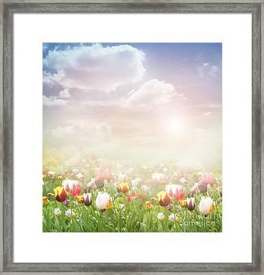 Easter Spring  Background Framed Print by Mythja  Photography