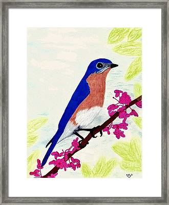 Framed Print featuring the drawing Florida - Eastern - Blue Bird by D Hackett