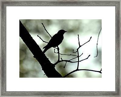 Eastern Bluebird Silhouette - 1095c1560a Framed Print by Paul Lyndon Phillips